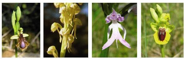 À descoberta de orquídeas silvestres e outras raridades