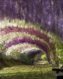 túnel em flor