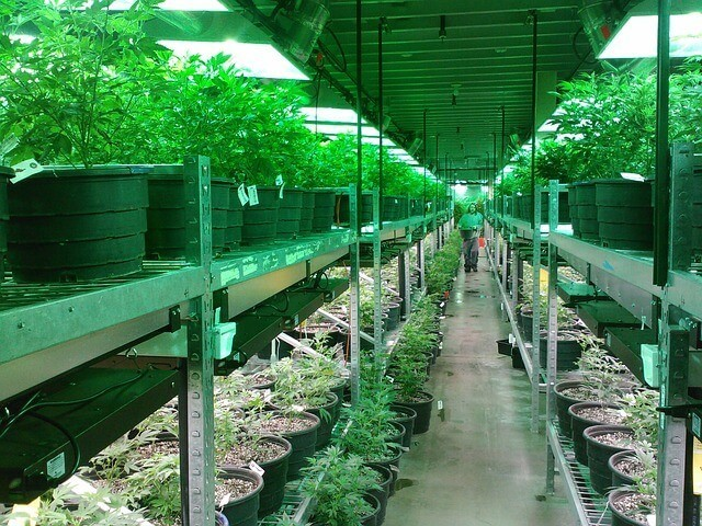 turismo de marijuana